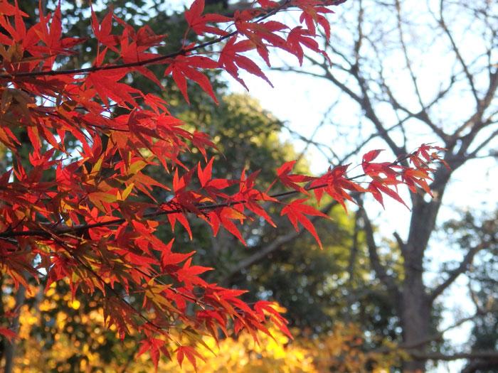 有栖川公園 紅葉(2)