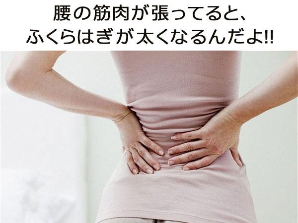 腰の筋肉が張ってると、ふくらはぎが太くなるんだよ!!