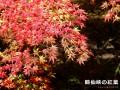 鶴仙峡(かくせんけい)の紅葉