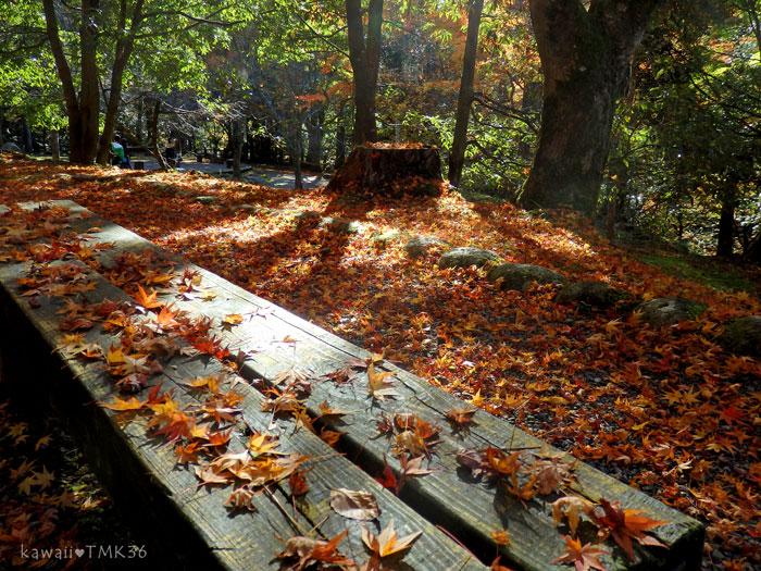鶴仙峡(かくせんけい)の落ち葉のじゅうたん♪