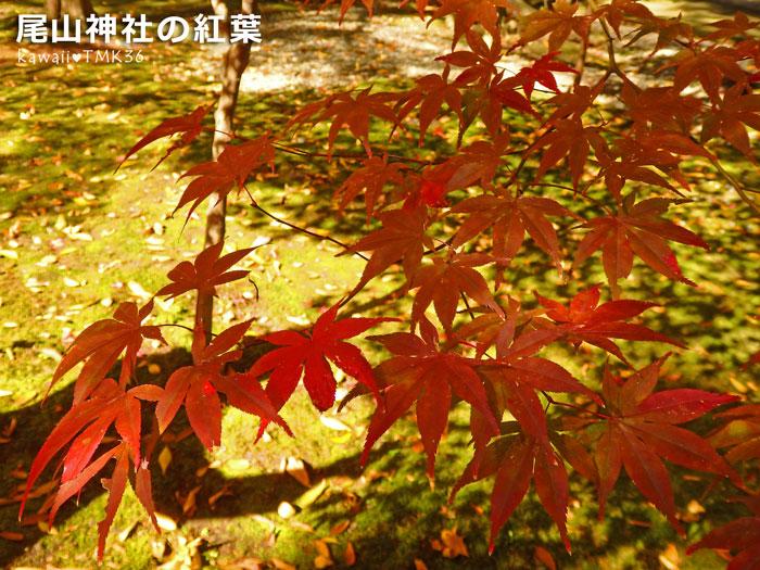 尾山神社の紅葉