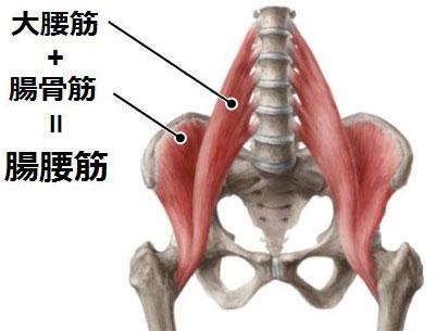 腸腰筋=大腰筋+腸骨筋