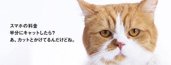 ワイモバイル、にゃんきゅっぱの猫ちゃん