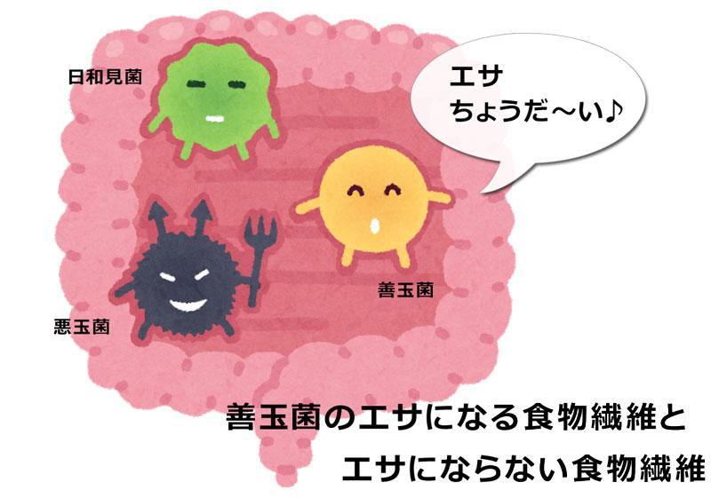 腸内細菌(善玉菌)のエサになる食物繊維とエサにならない食物繊維